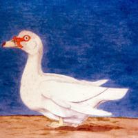 Ilustração da Expedição Philosophica pelas Capitanias do Pará, Rio Negro, Mato Grosso e Cuyabá de Alexandre Rodrigues Ferreira, com a legenda: Pato de Castella.