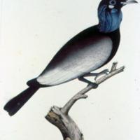 http://www.arca.museus.ul.pt/ArcaSite/obj/agua/MUHNAC-0000420-MB-IMG-web.JPG