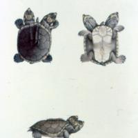 http://www.arca.museus.ul.pt/ArcaSite/obj/agua/MUHNAC-0000422-MB-IMG-web.JPG