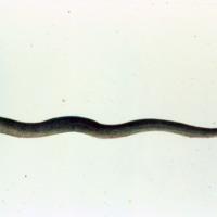 http://www.arca.museus.ul.pt/ArcaSite/obj/agua/MUHNAC-0000427-MB-IMG-web.JPG
