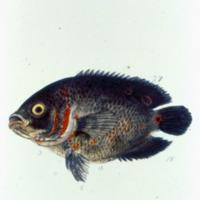 http://www.arca.museus.ul.pt/ArcaSite/obj/agua/MUHNAC-0000433-MB-IMG-web.JPG