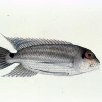 http://www.arca.museus.ul.pt/ArcaSite/obj/agua/MUHNAC-0000435-MB-IMG-web.JPG