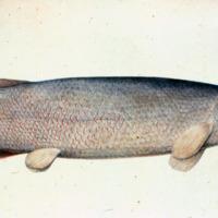 http://www.arca.museus.ul.pt/ArcaSite/obj/agua/MUHNAC-0000438-MB-IMG-web.JPG