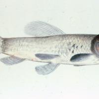 http://www.arca.museus.ul.pt/ArcaSite/obj/agua/MUHNAC-0000440-MB-IMG-web.JPG