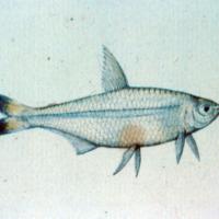 http://www.arca.museus.ul.pt/ArcaSite/obj/agua/MUHNAC-0000441-MB-IMG-web.JPG