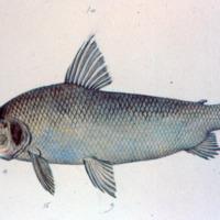 http://www.arca.museus.ul.pt/ArcaSite/obj/agua/MUHNAC-0000445-MB-IMG-web.JPG