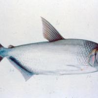 http://www.arca.museus.ul.pt/ArcaSite/obj/agua/MUHNAC-0000448-MB-IMG-web.JPG