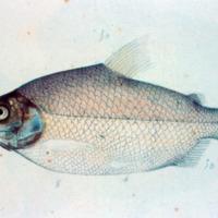 http://www.arca.museus.ul.pt/ArcaSite/obj/agua/MUHNAC-0000453-MB-IMG-web.JPG