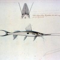 http://www.arca.museus.ul.pt/ArcaSite/obj/agua/MUHNAC-0000463-MB-IMG-web.JPG