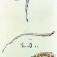 http://www.arca.museus.ul.pt/ArcaSite/obj/agua/MUHNAC-0000467-MB-IMG-web.JPG