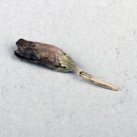 http://www.arca.museus.ul.pt/ArcaSite/obj/bs2/MUHNAC-0002091-JB-IMG-web.JPG