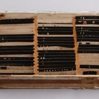 Caixa de madeira, com 61 preparações de conchas de diferentes espécies de moluscos bivalves e gastrópodes