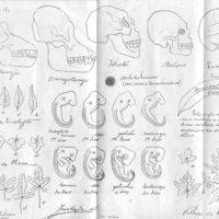 Reprodução de gravura de Arruda Furtado inserta no opúsculo 'O Homem e o Macaco'.