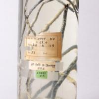 Espécime de Cnidaria da coleção Zoologia do Museu Nacional de História Natural e da Ciência
