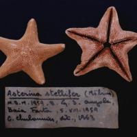 http://www.arca.museus.ul.pt/ArcaSite/obj/invNA/MUHNAC-0002576-MB-IMG-web.JPG