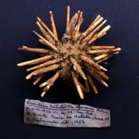 http://www.arca.museus.ul.pt/ArcaSite/obj/invNA/MUHNAC-0002577-MB-IMG-web.JPG