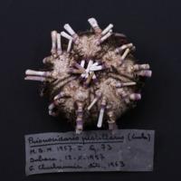 http://www.arca.museus.ul.pt/ArcaSite/obj/invNA/MUHNAC-0002578-MB-IMG-web.JPG