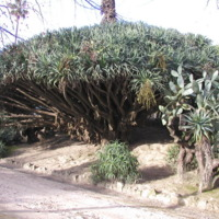 http://www.arca.museus.ul.pt/ArcaSite/obj/jb/MUHNAC-0000059-JB-IMG-web.JPG