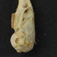 http://www.arca.museus.ul.pt/ArcaSite/obj/mam/MUHNAC-0002410-MB-IMG-web.JPG
