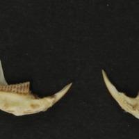 http://www.arca.museus.ul.pt/ArcaSite/obj/mam/MUHNAC-0002411-MB-IMG-web.JPG