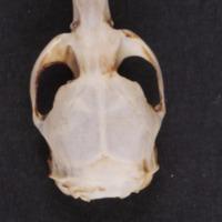 http://www.arca.museus.ul.pt/ArcaSite/obj/mam/MUHNAC-0002418-MB-IMG-web.JPG
