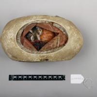 Modelo anatómico articulado com 4 fases do desenvolvimento embrionário de uma ave - quarta fase.