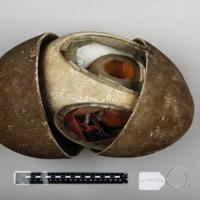 Modelo anatómico articulado com 4 fases do desenvolvimento embrionário de uma ave - casca do ovo aberta.