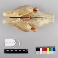 http://www.arca.museus.ul.pt/ArcaSite/obj/auzoux/MUHNAC-0002006-MB-IMG-web.JPG