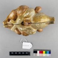 http://www.arca.museus.ul.pt/ArcaSite/obj/auzoux/MUHNAC-0002014-MB-IMG-web.JPG