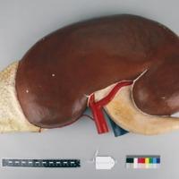 http://www.arca.museus.ul.pt/ArcaSite/obj/auzoux/MUHNAC-0002015-MB-IMG-web.JPG
