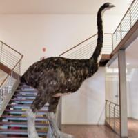 http://www.arca.museus.ul.pt/ArcaSite/obj/modelos/MUHNAC-0002434-MB-IMG-web.JPG