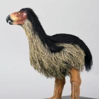http://www.arca.museus.ul.pt/ArcaSite/obj/modelos/MUHNAC-0002435-MB-IMG-web.JPG