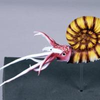 http://www.arca.museus.ul.pt/ArcaSite/obj/modelos/MUHNAC-0002440-MB-IMG-web.JPG