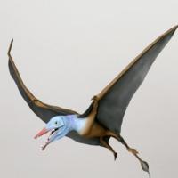 http://www.arca.museus.ul.pt/ArcaSite/obj/modelos/MUHNAC-0002442-MB-IMG-web.JPG