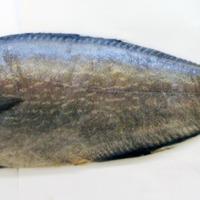 http://www.arca.museus.ul.pt/ArcaSite/obj/peixes/MUHNAC-0001771-MB-IMG-web.JPG
