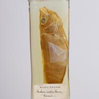 http://www.arca.museus.ul.pt/ArcaSite/obj/peixes2/MUHNAC-0002205-MB-IMG-web.JPG