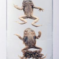http://www.arca.museus.ul.pt/ArcaSite/obj/anfrept/MUHNAC-0002478-MB-IMG-web.JPG
