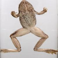 http://www.arca.museus.ul.pt/ArcaSite/obj/anfrept/MUHNAC-0002490-MB-IMG-web.JPG
