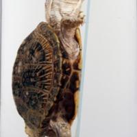 http://www.arca.museus.ul.pt/ArcaSite/obj/anfrept/MUHNAC-0002495-MB-IMG-web.JPG