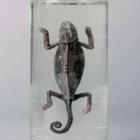 http://www.arca.museus.ul.pt/ArcaSite/obj/anfrept/MUHNAC-0002500-MB-IMG-web.JPG