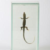 http://www.arca.museus.ul.pt/ArcaSite/obj/anfrept/MUHNAC-0002510-MB-IMG-web.JPG