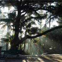 Jardim Botânico: Uma Viagem ao mundo das plantas