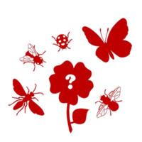 Plantas e Insetos: Polinizadores Procuram-se!